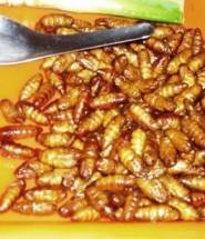 Самые необычные блюда из насекомых
