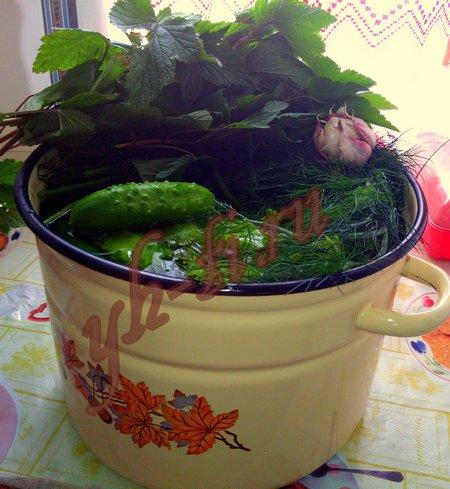 Ингредиенты для малосольных огурцов